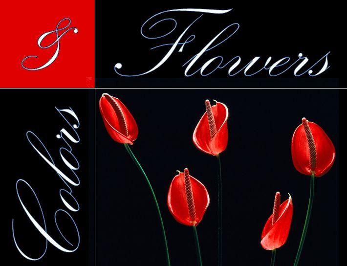 Colors & Flowers Логотип и фирменный стиль - дизайнер k-hak