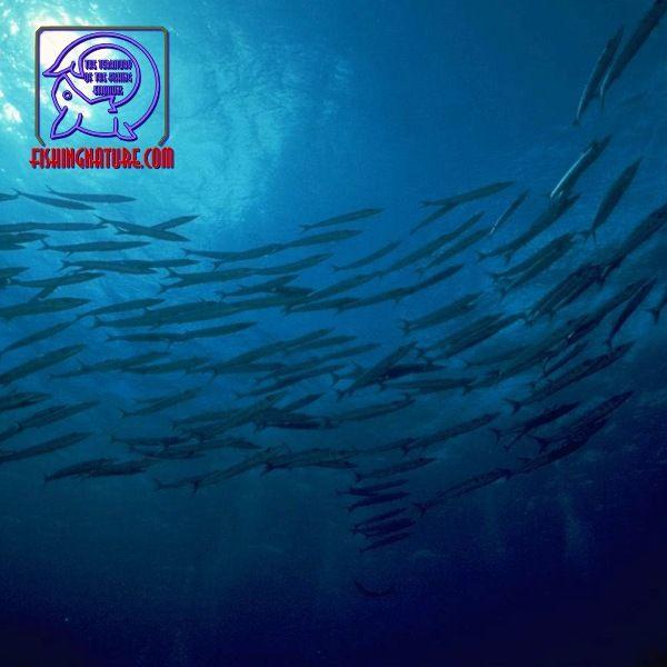 Лого он-лайн фотожурнала о рыболовстве и природе - дизайнер omega7779