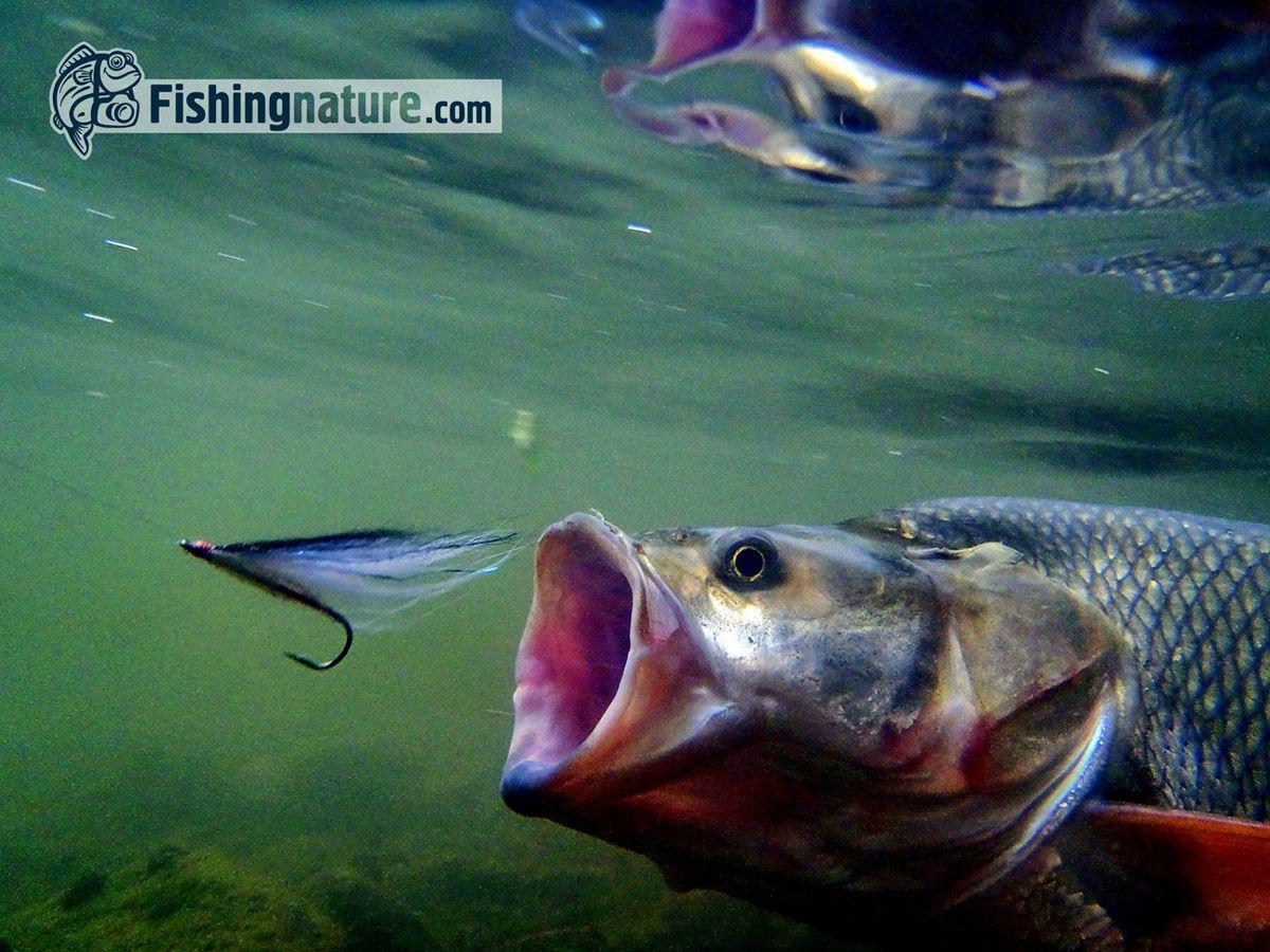 Лого он-лайн фотожурнала о рыболовстве и природе - дизайнер Zheravin