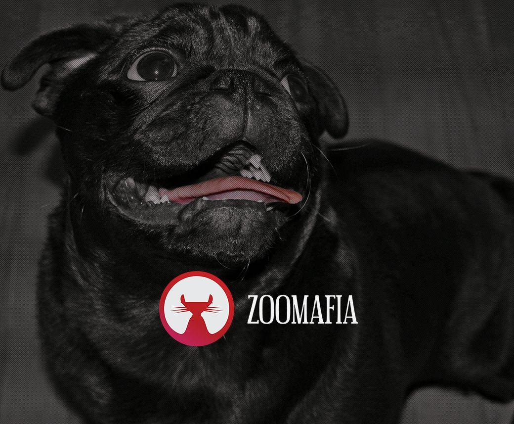 Логотип для интернет магазина зоотоваров - дизайнер msveet
