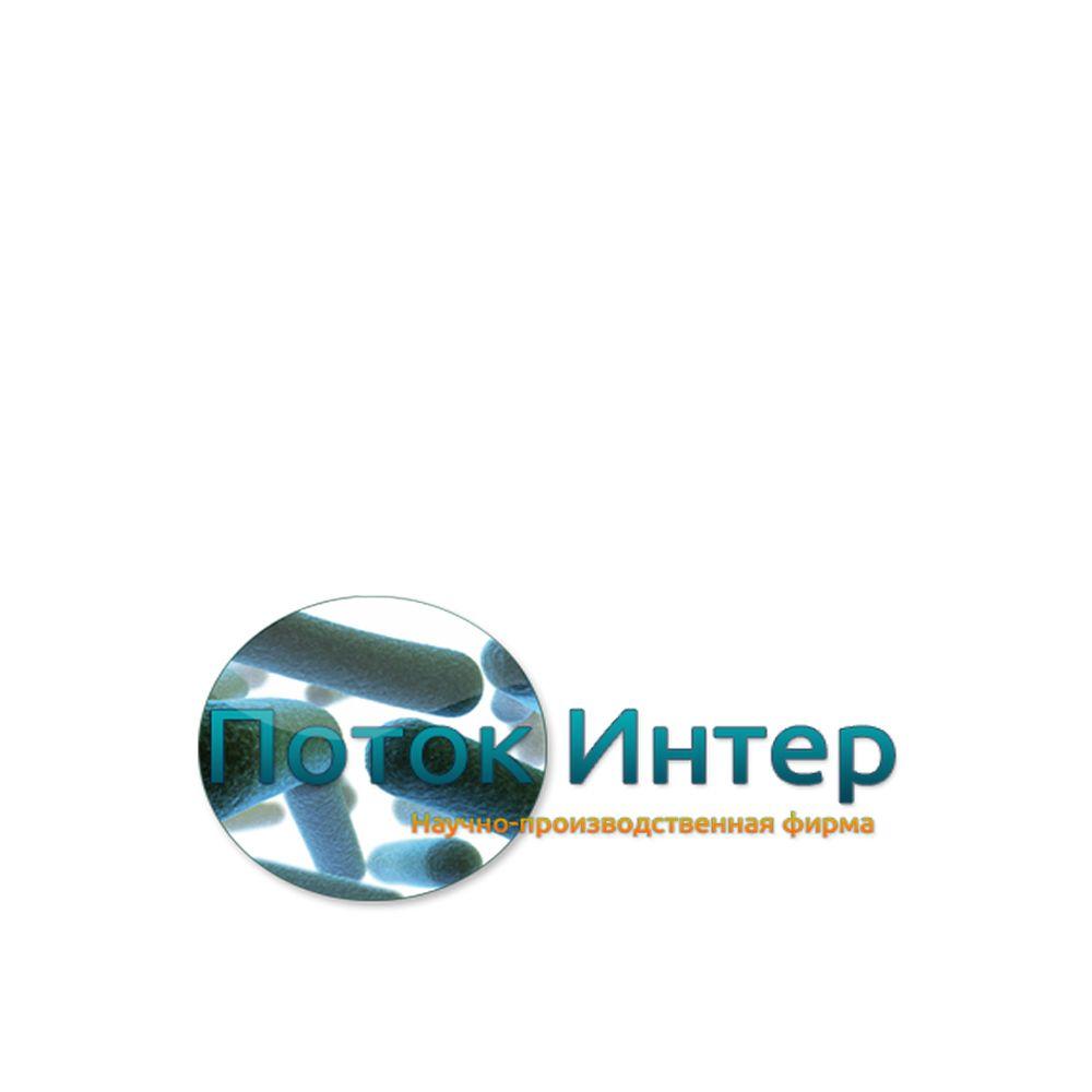 Лого и фирм стиль для Бинго - дизайнер sermusgun