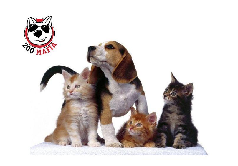 Логотип для интернет магазина зоотоваров - дизайнер a-lenka85