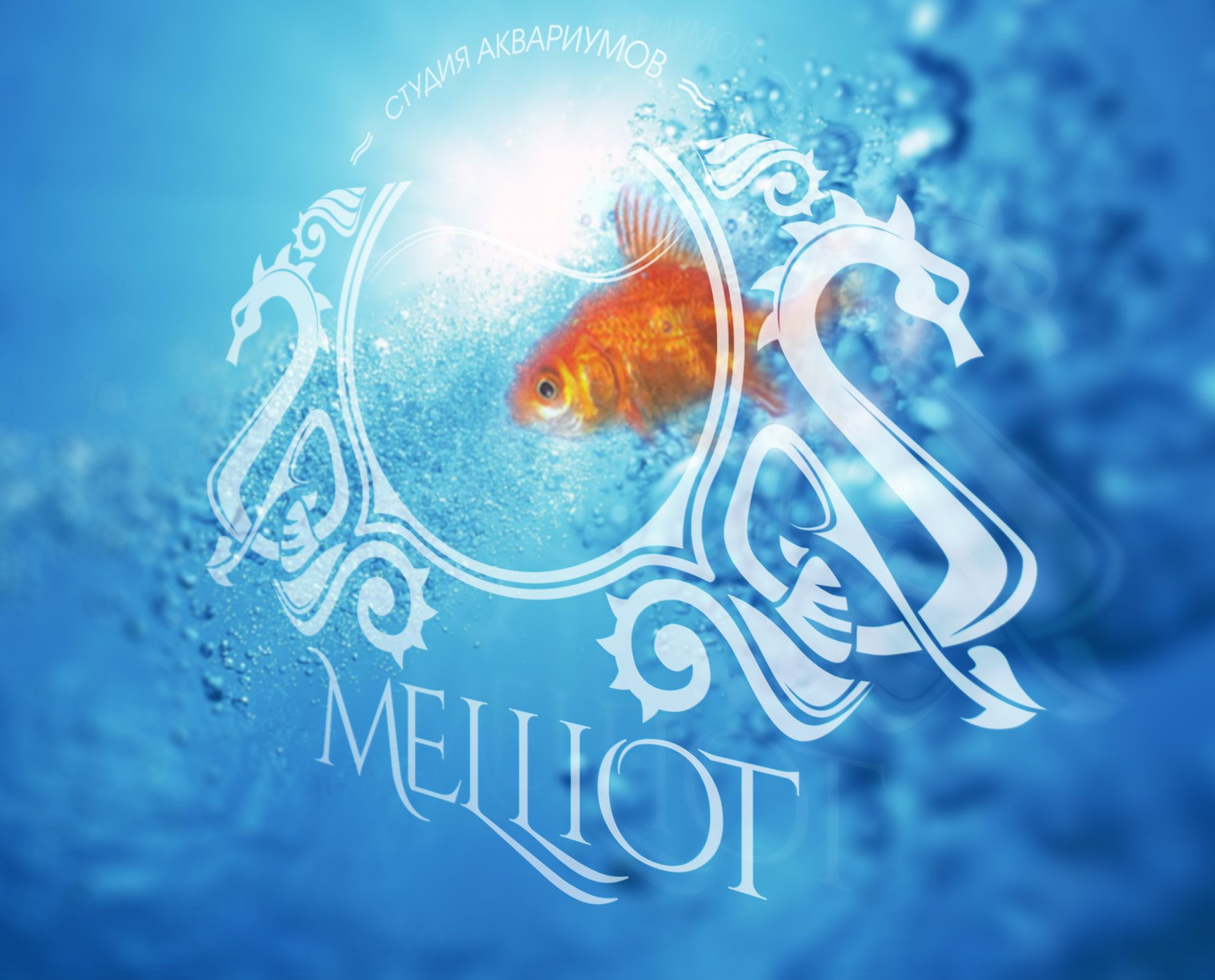 Логотип для студии аквариумов
